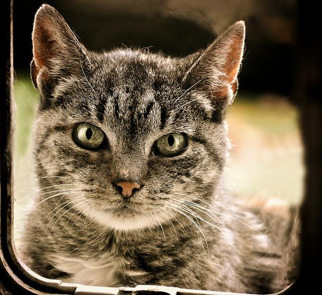 7 redenen waarom u een microchip-kattenluik moet kopen